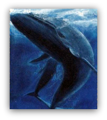Majestic Blue Whale - The Largest Animal on Earth