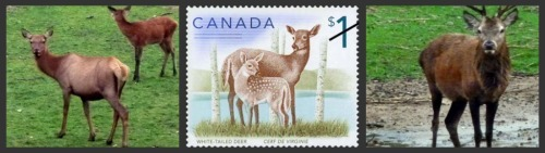 white tail deers on canadian stamps