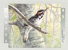 Canada Stamps Pic Chevelu Hairy Woodpecker