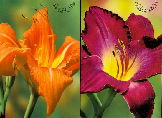 Daylilies Prepaid Postcards Canada March 2012